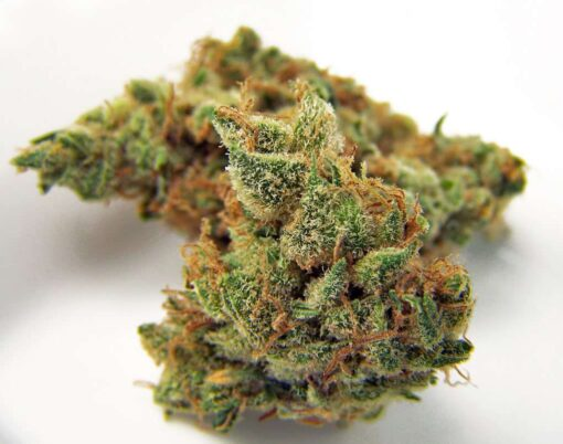 Buy best northern lights strain