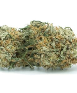 blue cheese strain indica strains