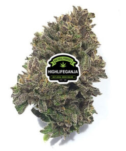buy-Alaskan-Thunder-Fuck-Strain - highlifeganja