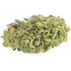 durban poison - durban poison strain - durban poison where to buy .
