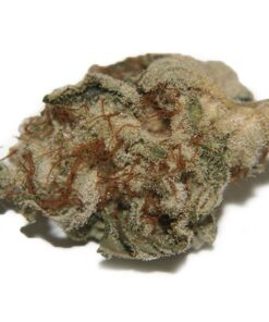 buy White Widow (sativa strains)