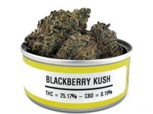 blackberry kush strain