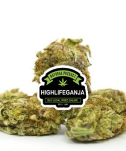 Blissful-Wizard-Hybrid-highlifeganja