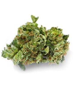 G-13 for sale - highlieganja