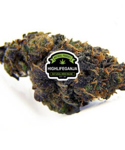 Blackberry-Kush-Strain